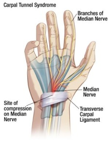 carpalanatomy